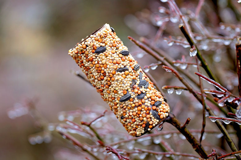 school holiday fun - home made bird feeder kids craft