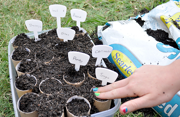 {The Organised Housewife} Growing Seedlings 2