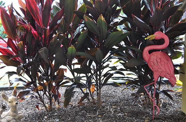 outdoor-flamingo