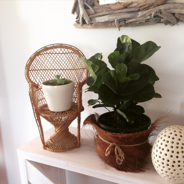 Interior styling indoor plants the organised housewife i love indoor plants and the look and feel they bring to a home in my home i have a white and timber colour palette and love incorporating the greenery of fandeluxe Image collections