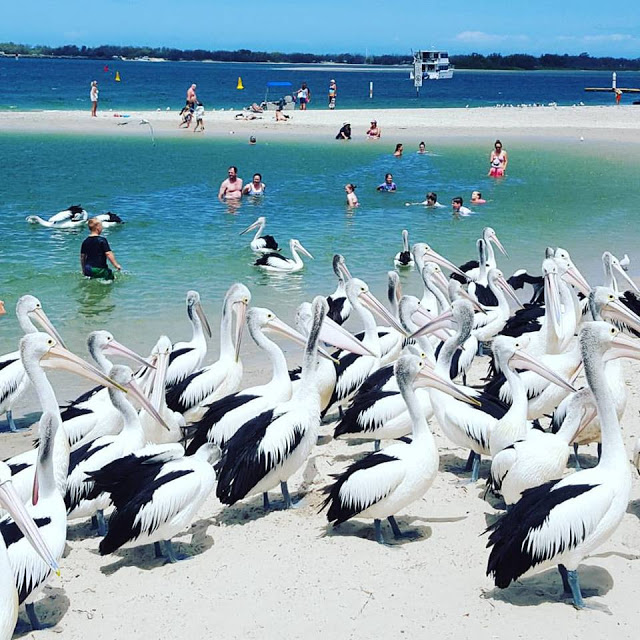 The Gold Coast really is paradise from beaches in the east to mountains in the west no matter which way you go you're guaranteed an enjoyable day out. If you're thinking of travelling the Gold Coast, try to visit some of these destinations.