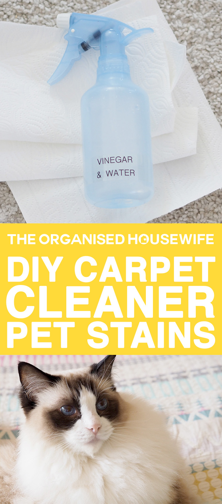 diy carpet cleaner. Easy And Effective DIY Carpet Cleaner For Pet Stains, To Remove Any Messes Odours Diy Y