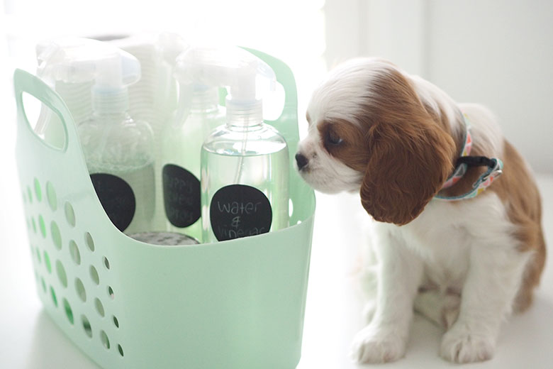 We welcomed a little puppy into our household on the weekend. With new a puppy, I expected there may be messes in the house, so I planned ahead and made up this little Organised Puppy Cleaning Caddy. So glad I did!!