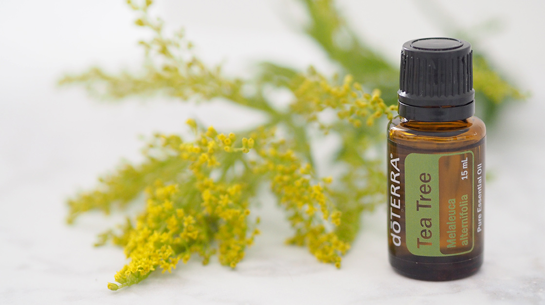 Tea Tree Essential Oil, is best known for its purifying qualities, which make it useful for cleansing the skin and home surfaces, purifying the air, or promoting healthy immune function.