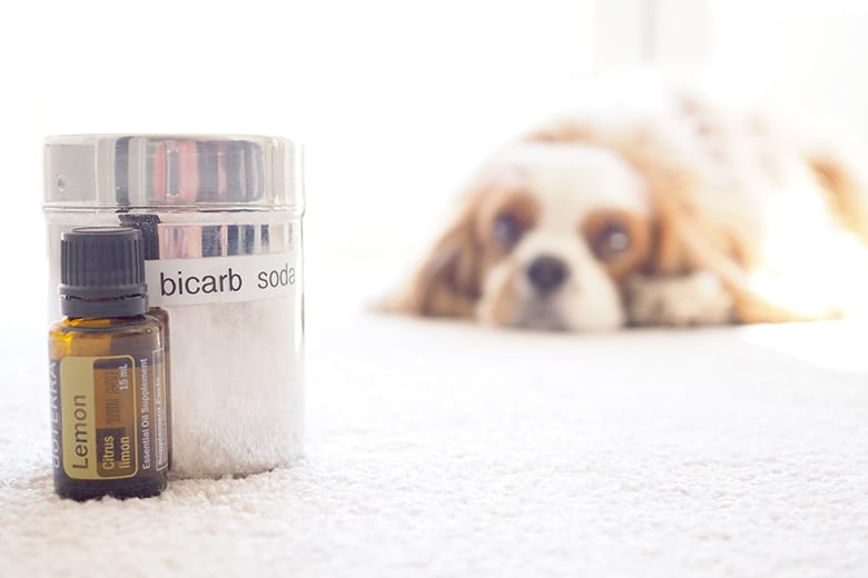 DIY chemical free carpet cleaning with dogs and pets