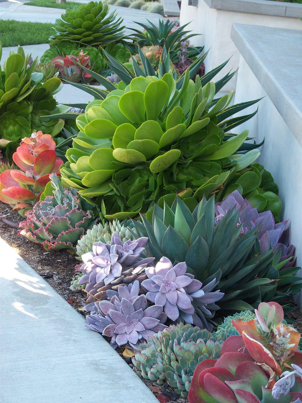 Beautiful succulent garden inspiration for outdoor area