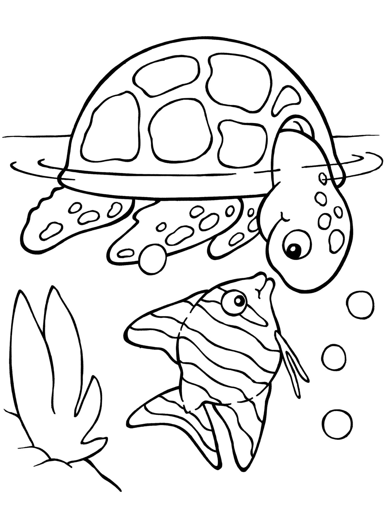 Colouring page : Turtles to colour for kids