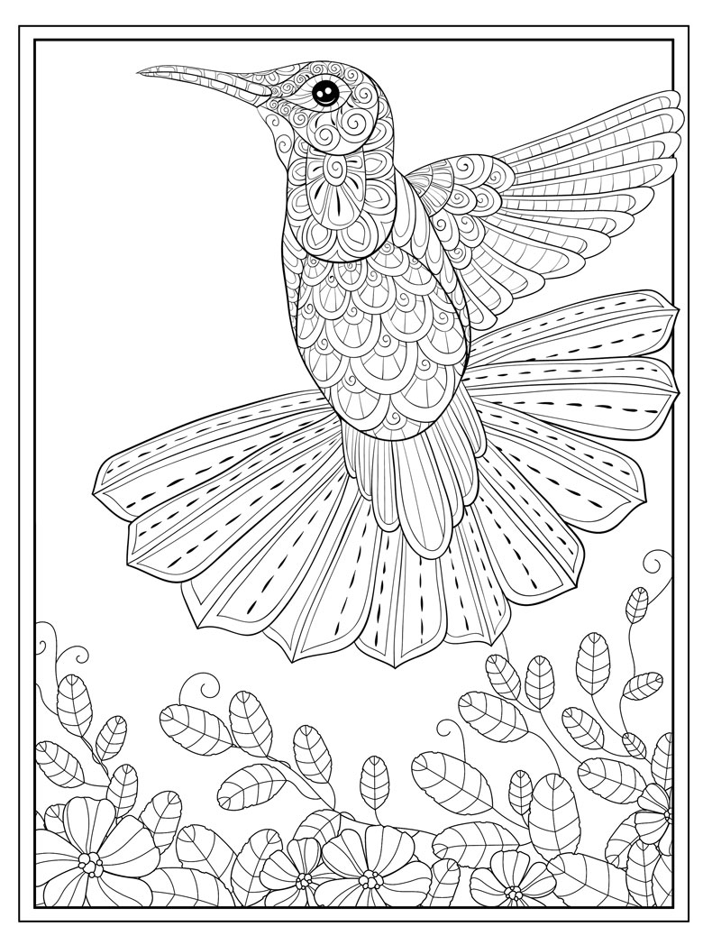 adult colouring in page free hummingbird