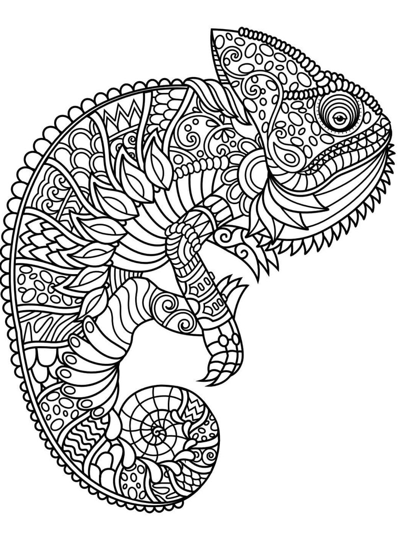 chameleon adult colouring in page